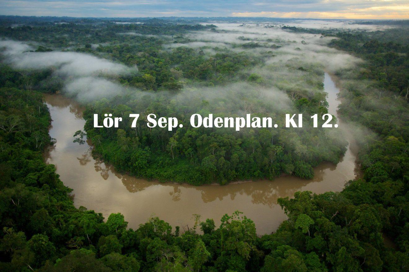 Amazonas manifestation - 7/9