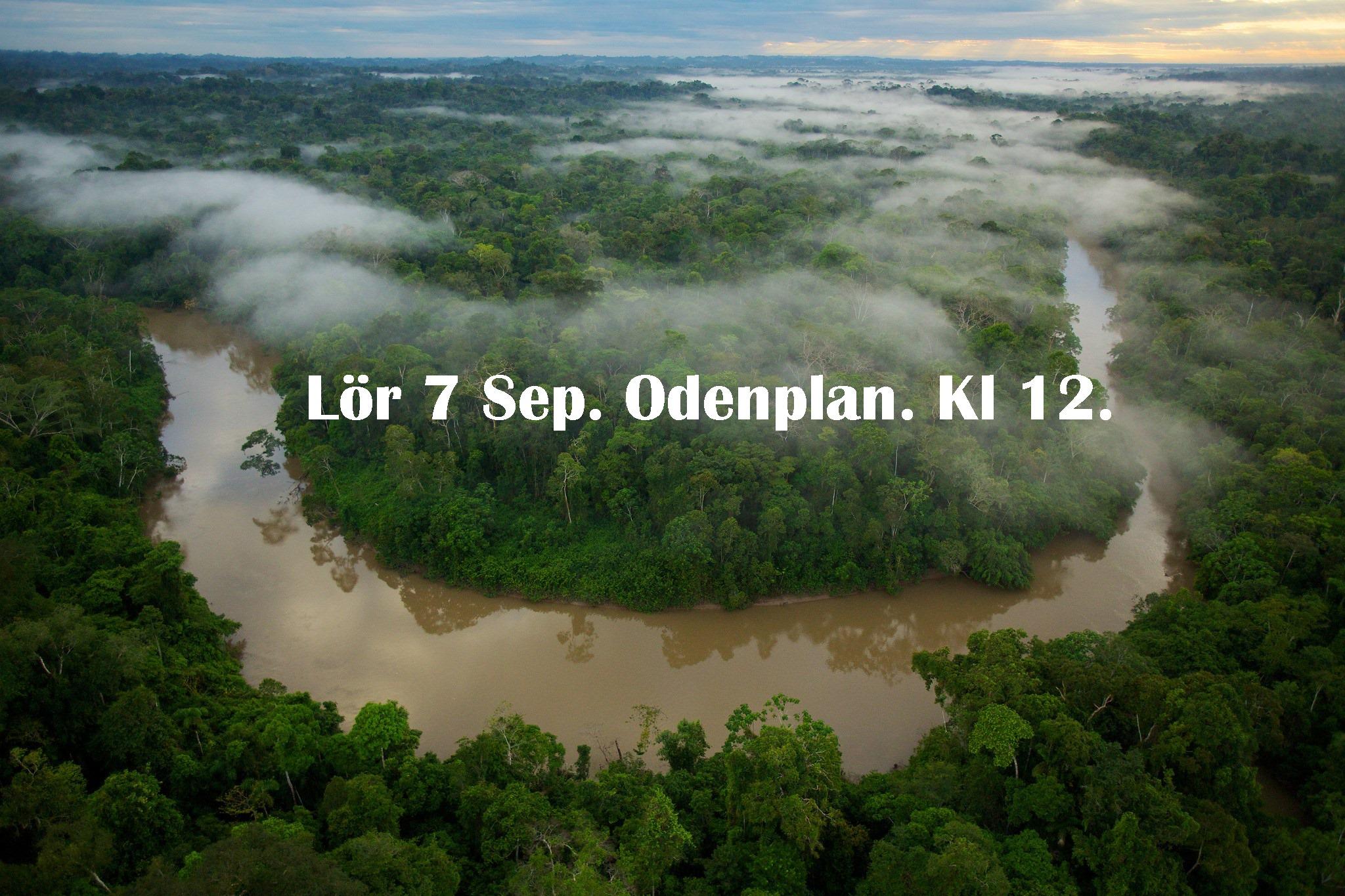 Amazonas manifestation – 7/9