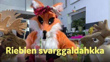 Riebien svarggaldahka | SVT Barn